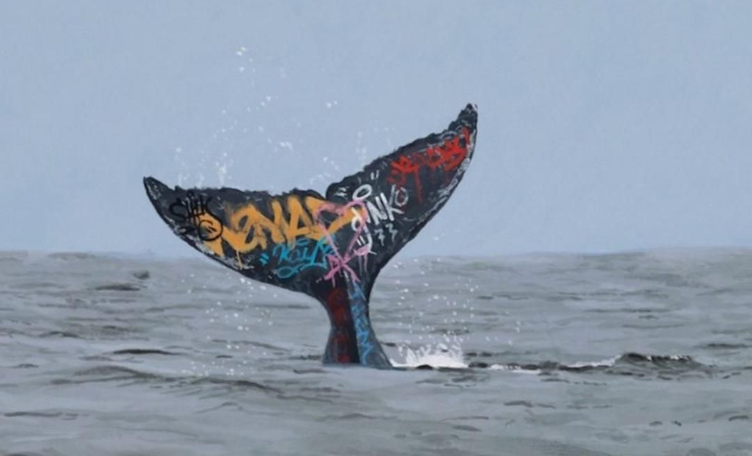 Marine biologists are now tagging whales, in the hope to understand their movements better