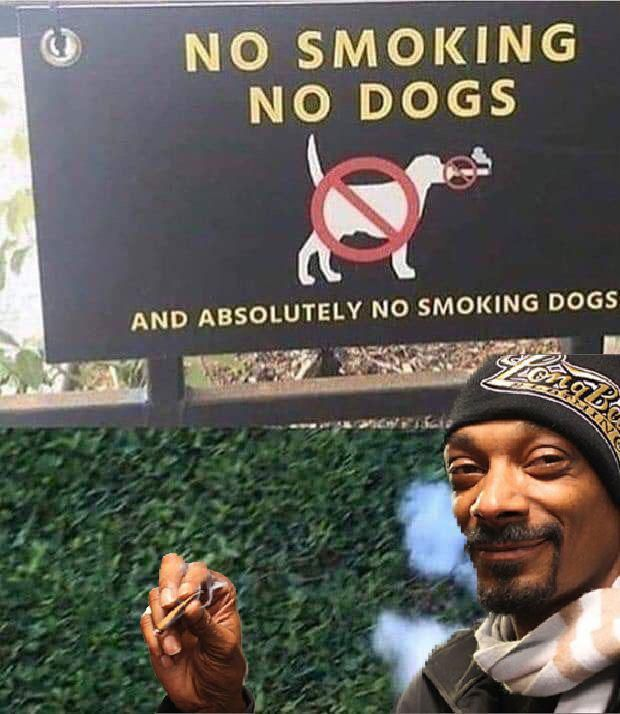 Can't stop the Dogg