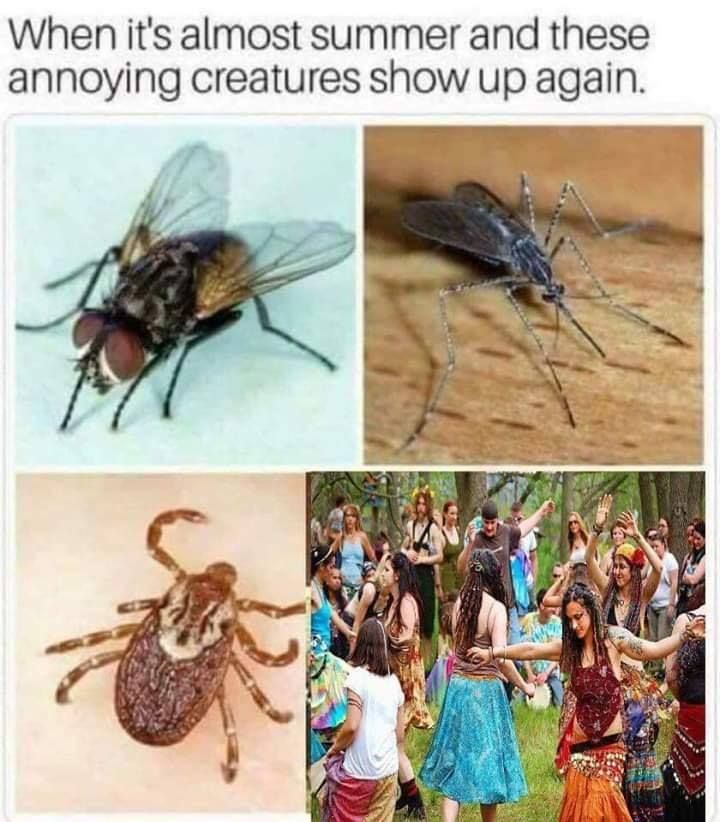 *** I HATE THIS CREATURES