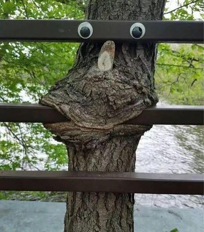 Nature's Sense of Humor