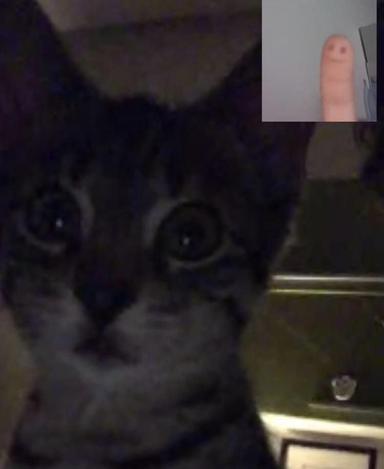 I left my cat and my girlfriend alone in a facetime call