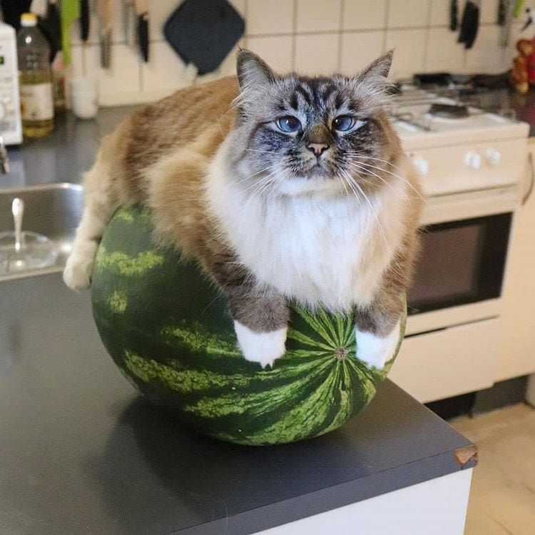 Don't even think about it. The melon belongs to me all alone.