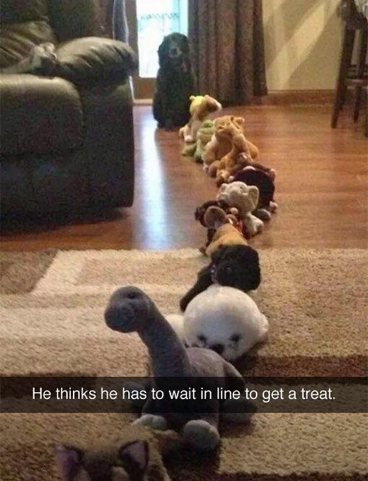 Patient doggo