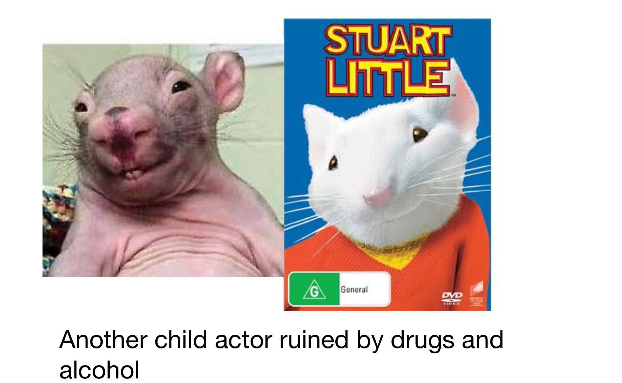 Poor Stuart little