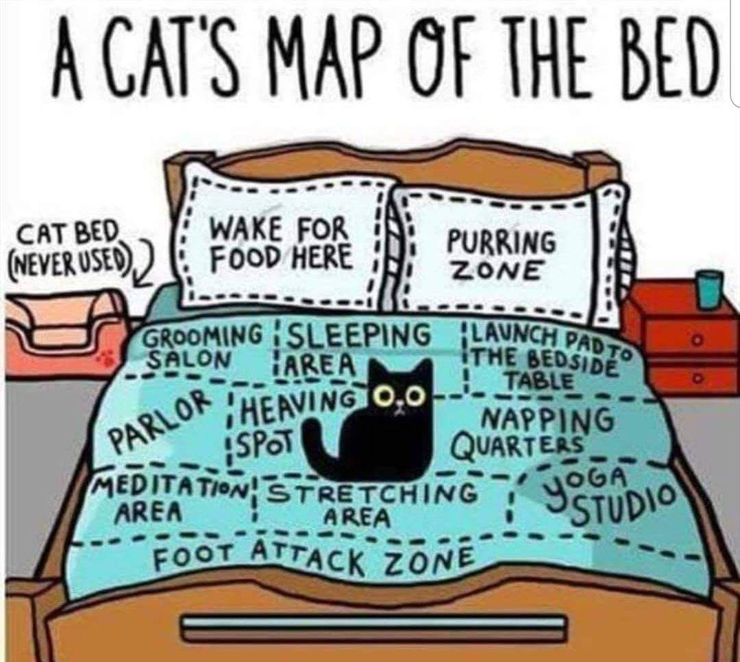 cat owners will relate.