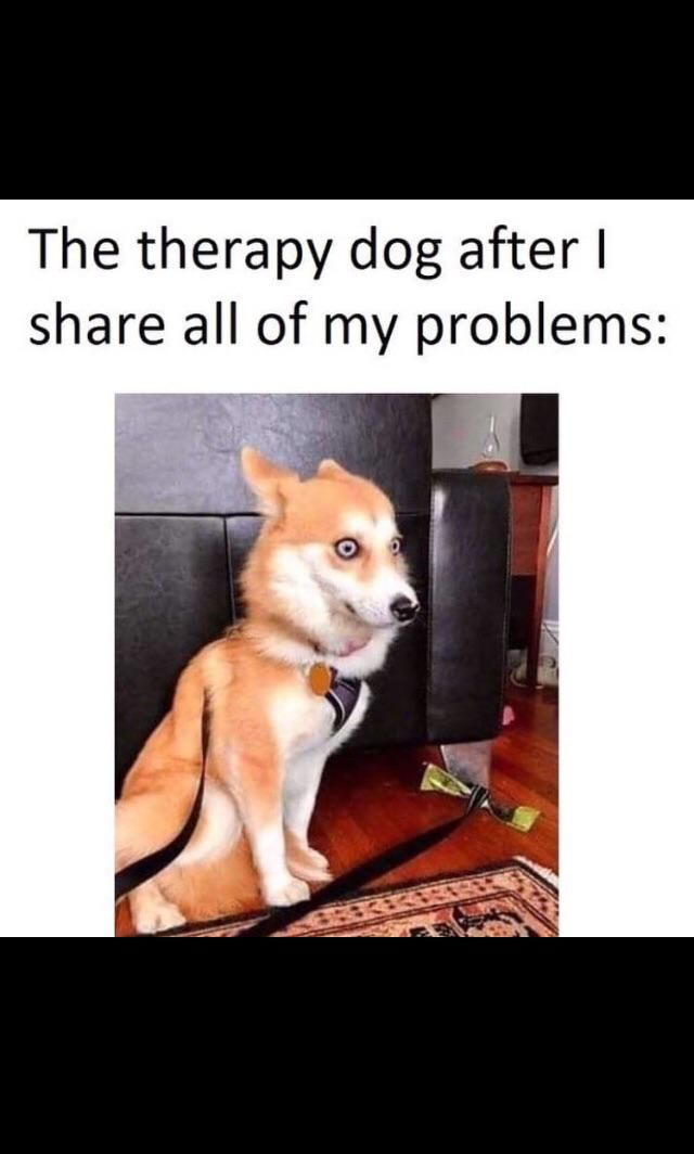 Need a therapy human for the dog