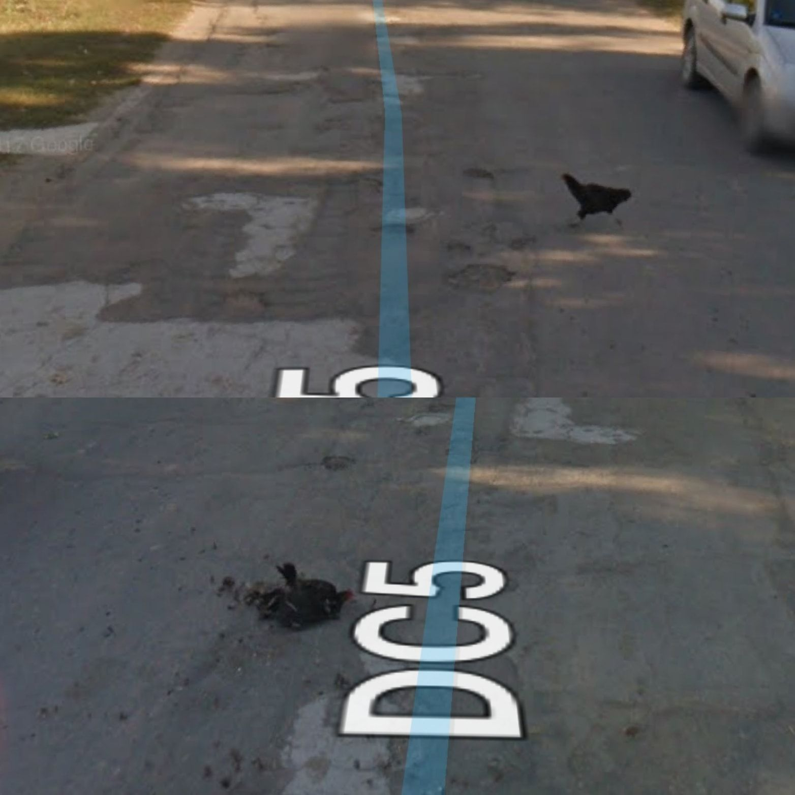 Google street view car ran over a chicken who was trying to cross the road