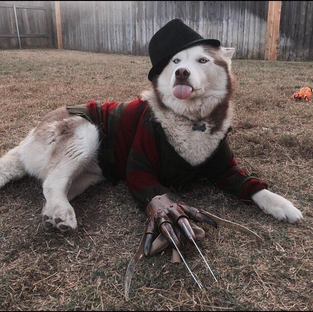 So we're posting dogs in costumes?