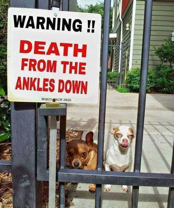 BEWARE OF DOG!!!!