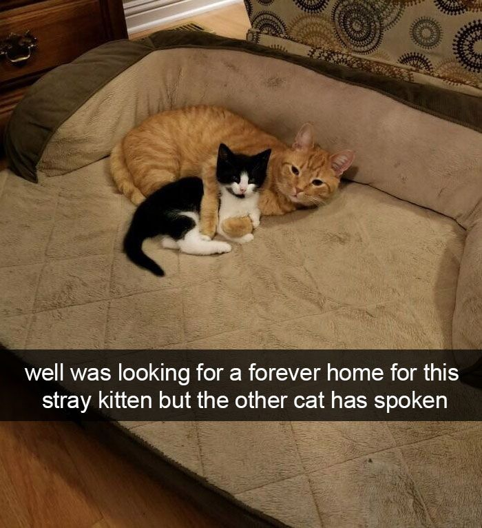 Cats Looking For Forever Homes