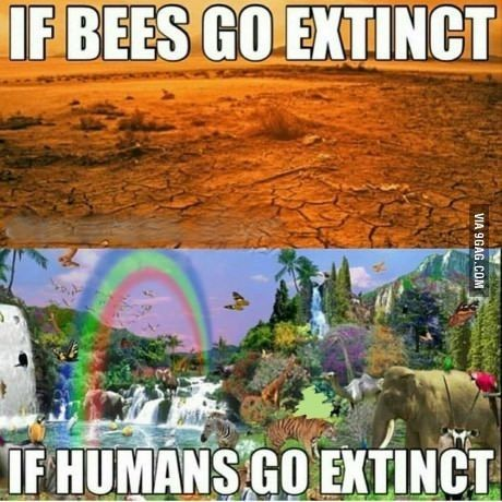 When bees go, so goes our food