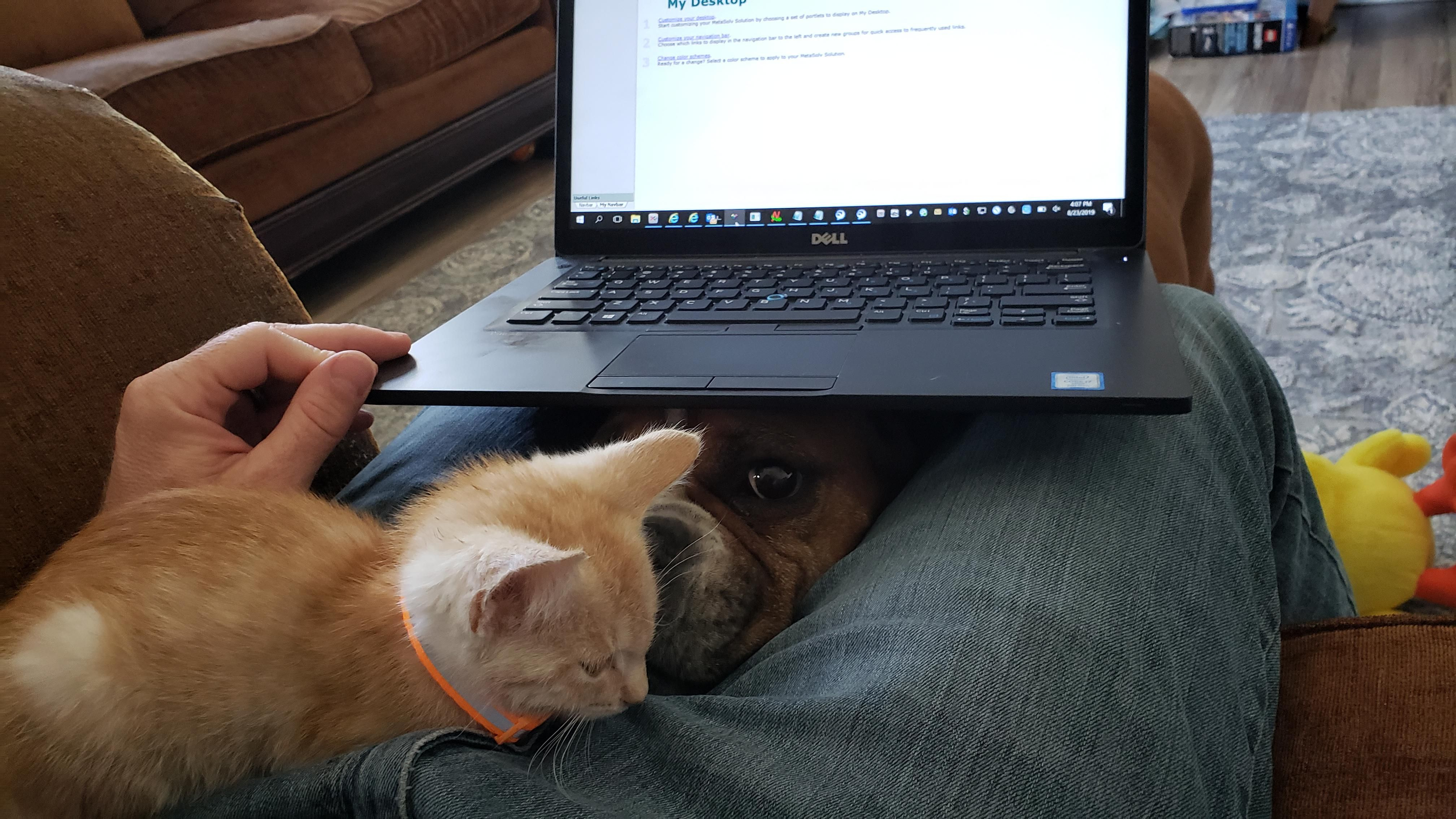 Got a new kitten yesterday. My boxer thinks it's her baby. This is how I'm trying to work from home today