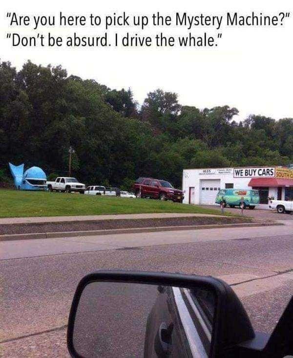 Whale I drive a goldfish