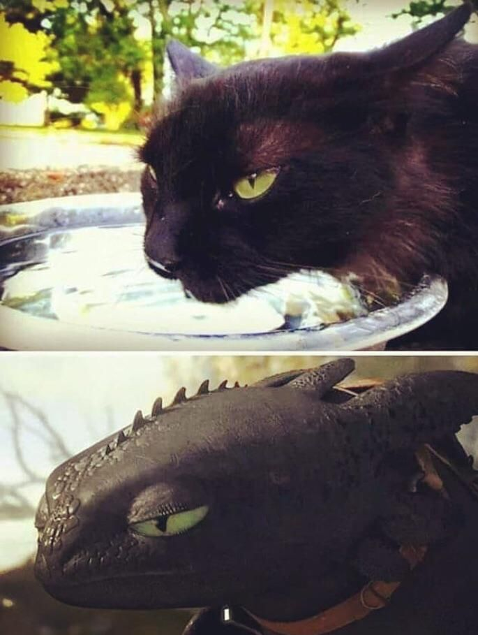 Further proof that Toothless is based off a cat.