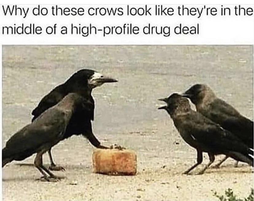 U got dem seeds