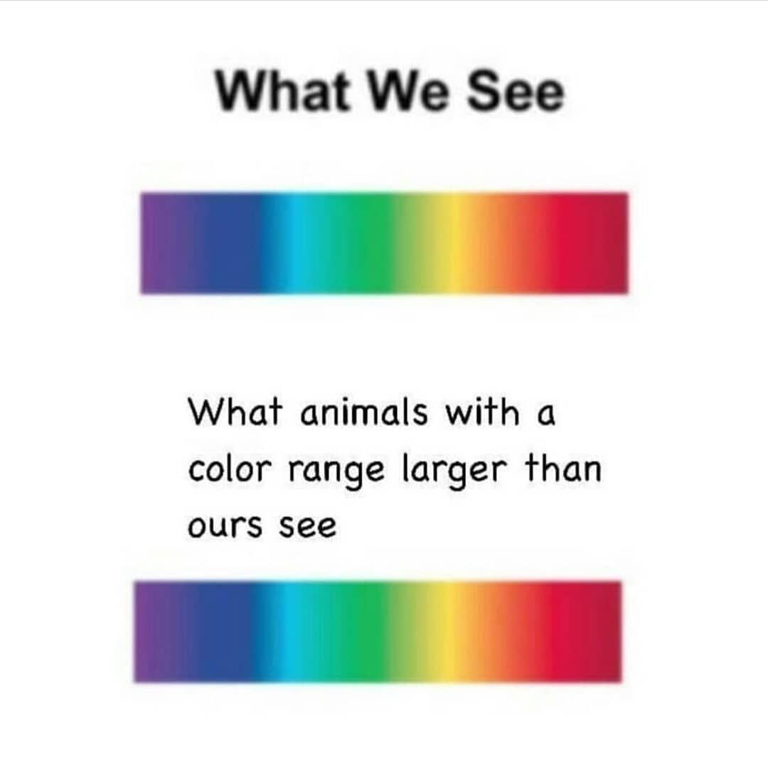 tO Be FaiR, yOu HaVe To hAve a veRy HiGh iQ to uNdeRstAnD ThiS mEme