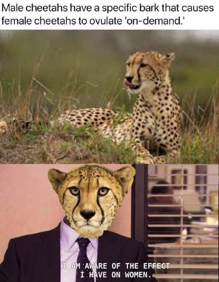 Animal magmatism