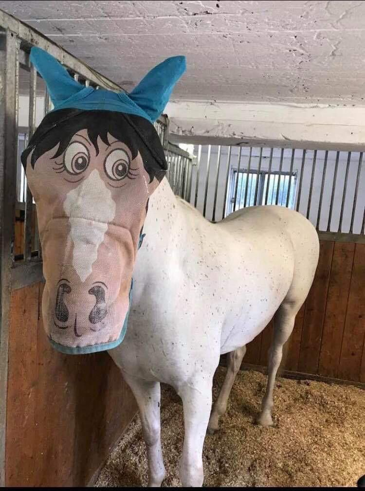 My friend got her horse back yesterday. Been leased for two years. Anyways. The former career returned the horse with this mosquito mask, and we thought is was hilarious.