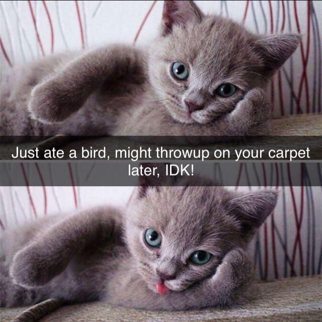 Ate a bird, might throwup on your carpet later, IDK!