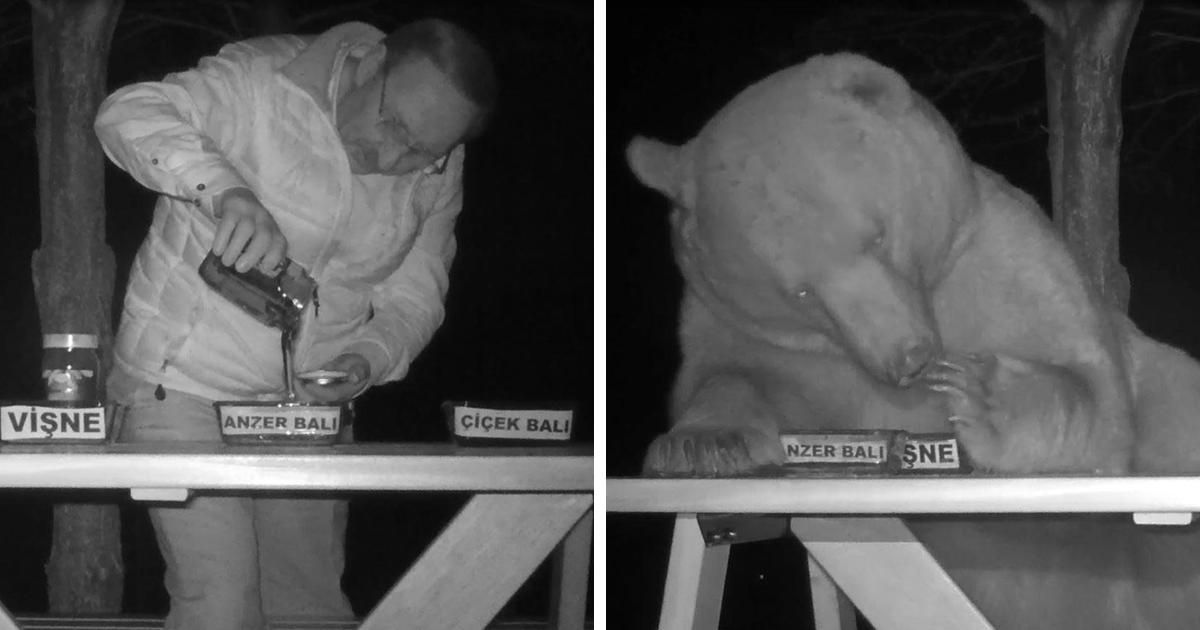 After Bears Kept Stealing This Man's Honey, He Decided To Turn Them Into Taste Testers