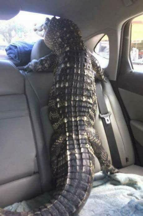Florida pets say goodbye during evacuations.