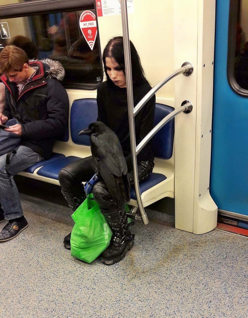 A girl and her raven on the running subway ....