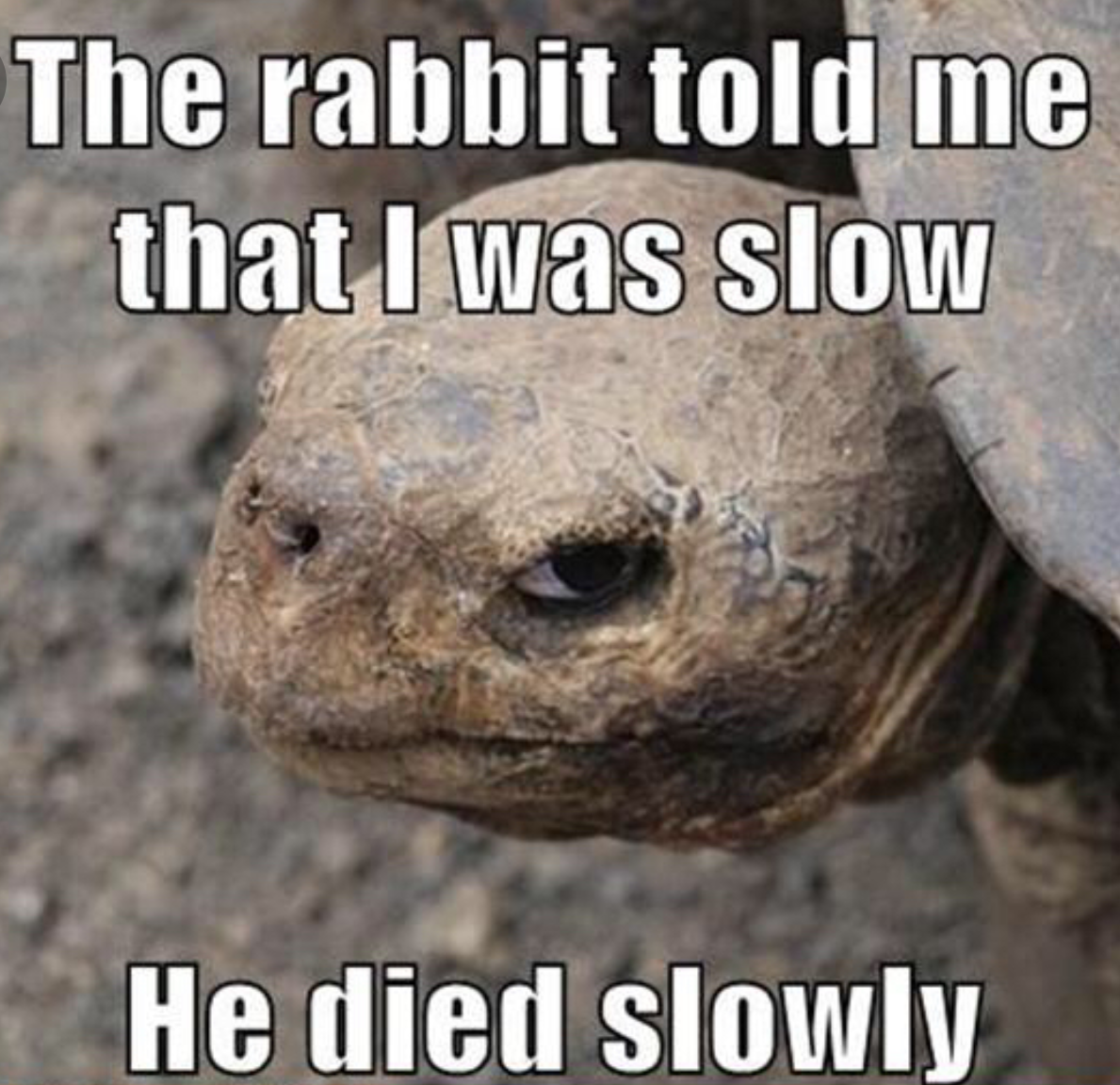 Don't mess with the turtle