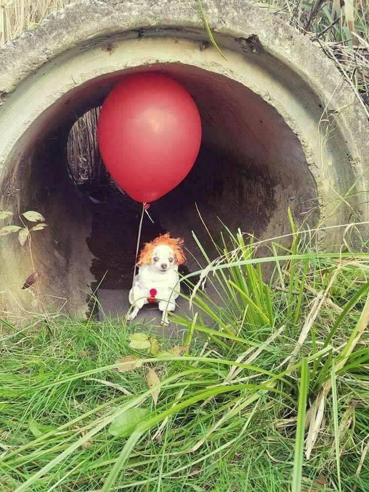 We all bark down here