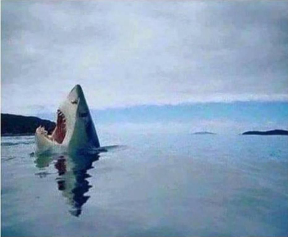 Rare photo of a white shark stepping on a lego piece