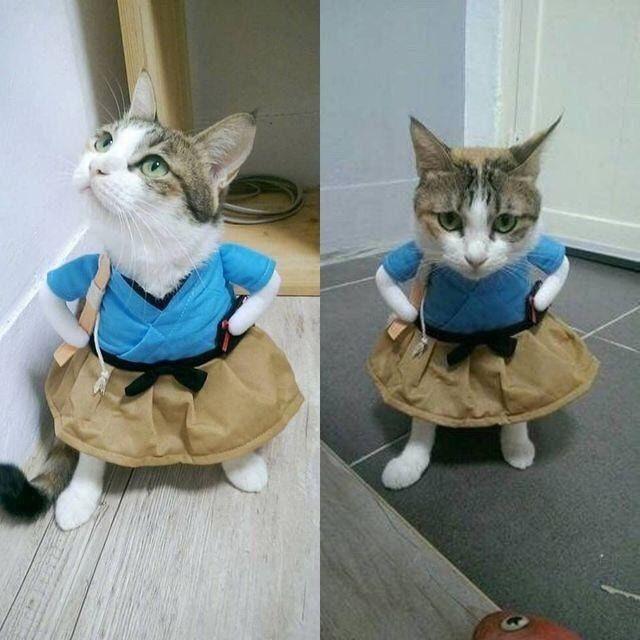 You wanna tell me where you stashed the goddamn catnip?