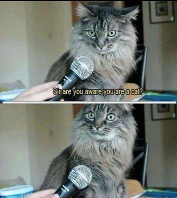 I'M A CAT??