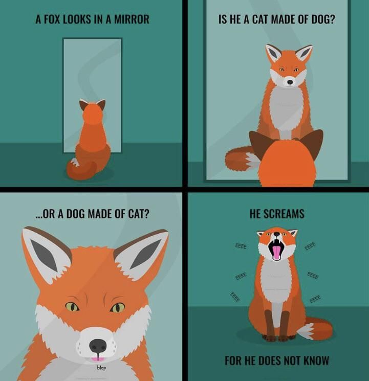The fox doesn't know