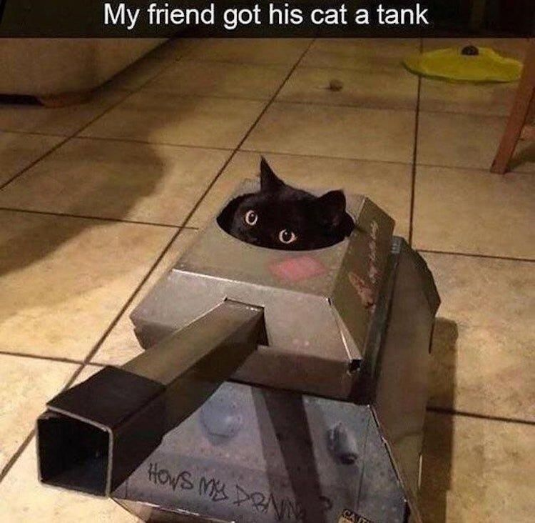 It's bad luck for a black cat to cross your path with a tank.