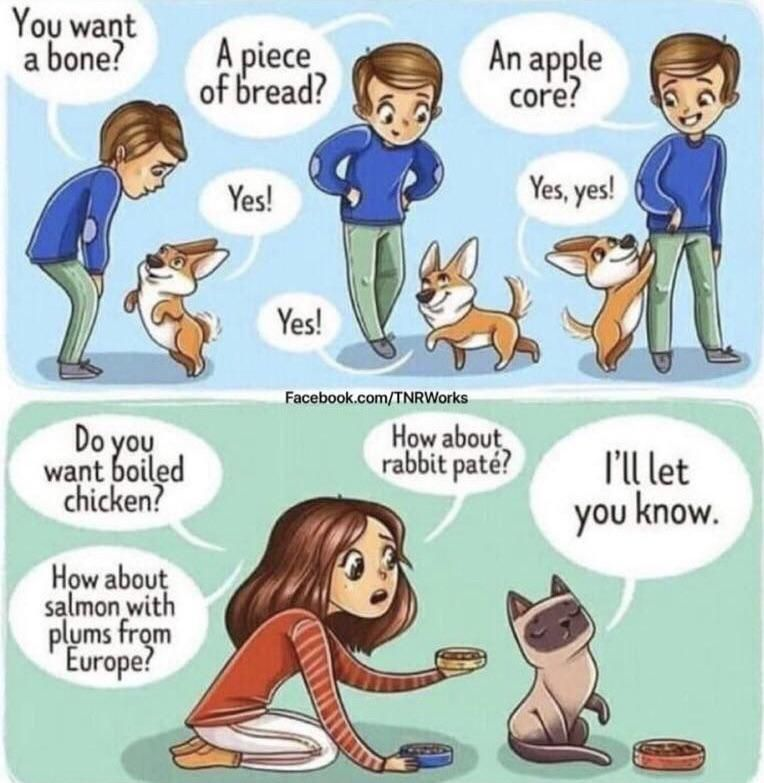 Pet Ownership