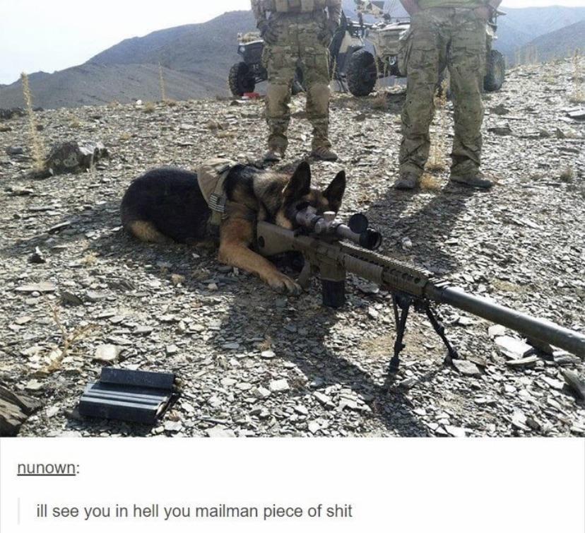 Army doggo
