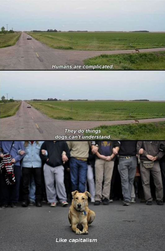 DAMN I MISS THIS DOG