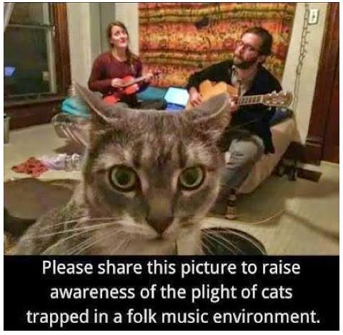 Feline abuse