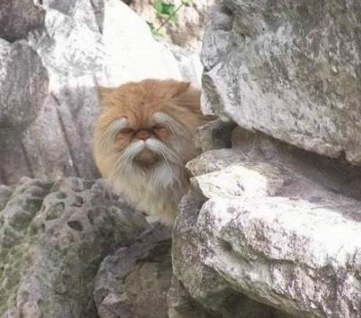 Pretty sure this cat knows kung fu