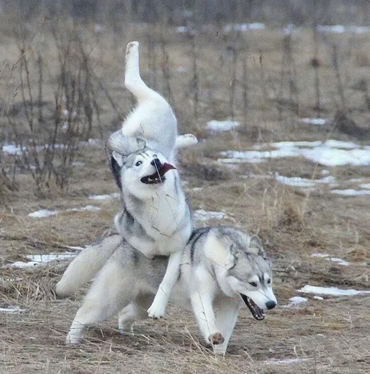 Curses! We Collide!