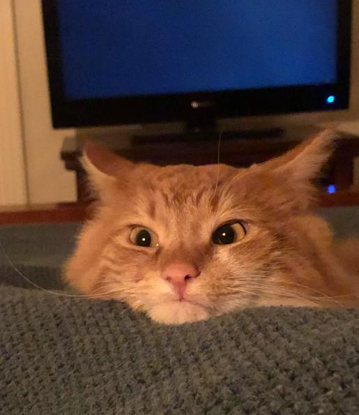 Puss is dangerous