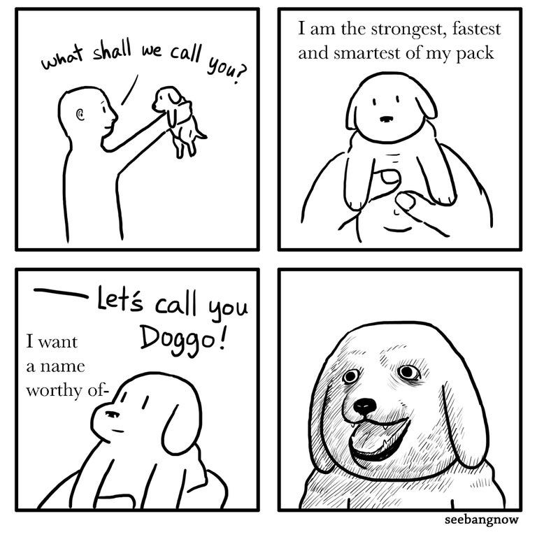 Name your dog well