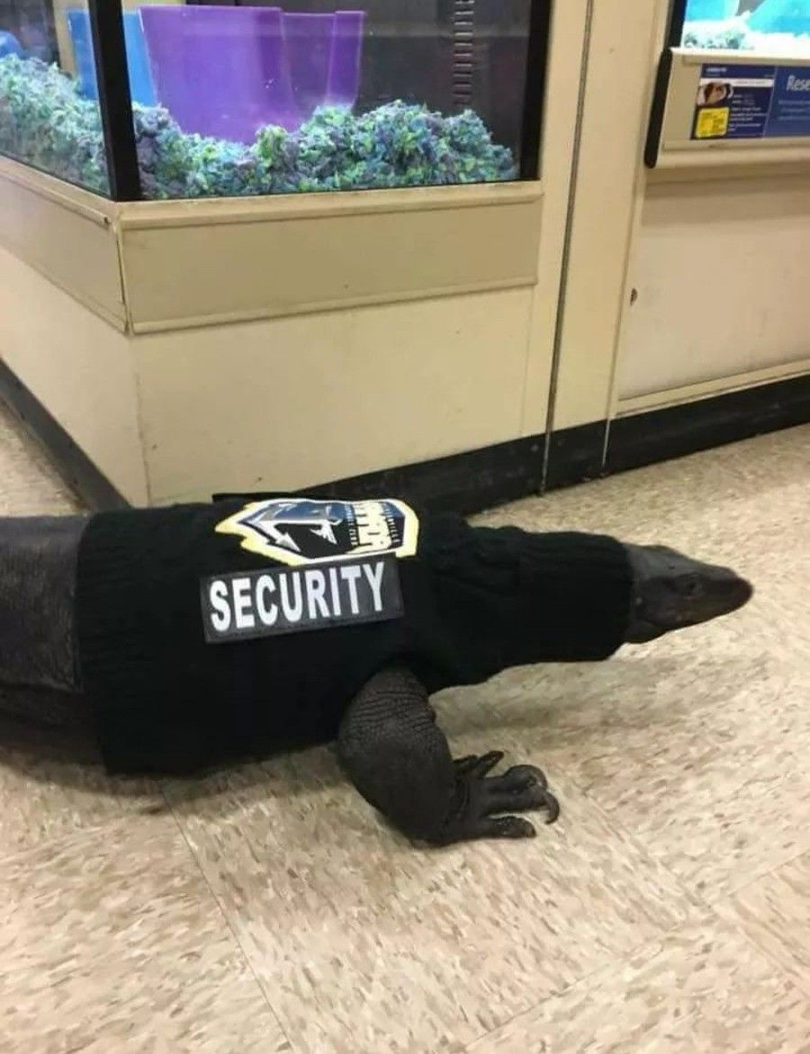 Look out, it's a hall monitor