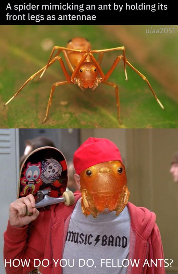 *does ant things*