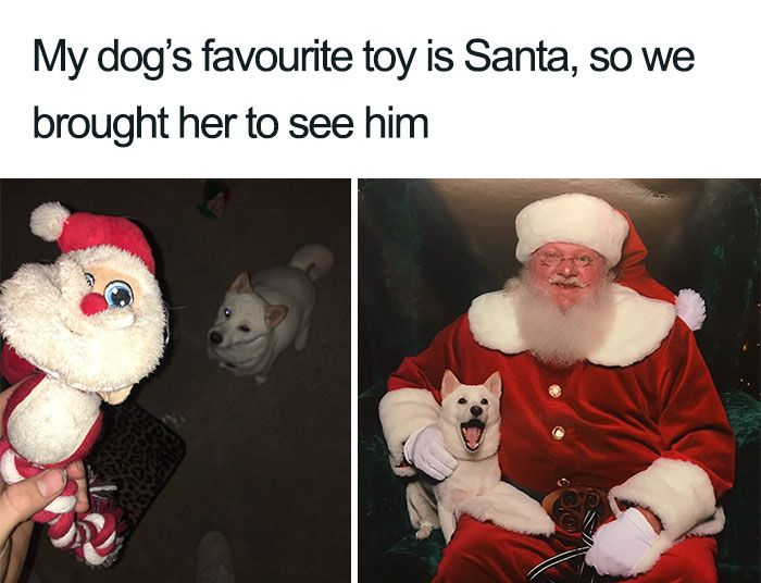 Santa Paws.