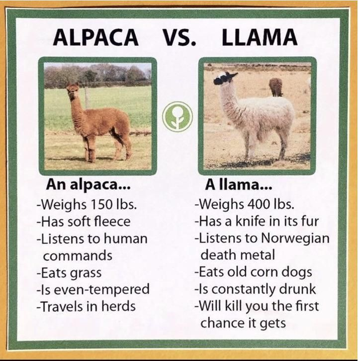 The difference between alpacas and llamas