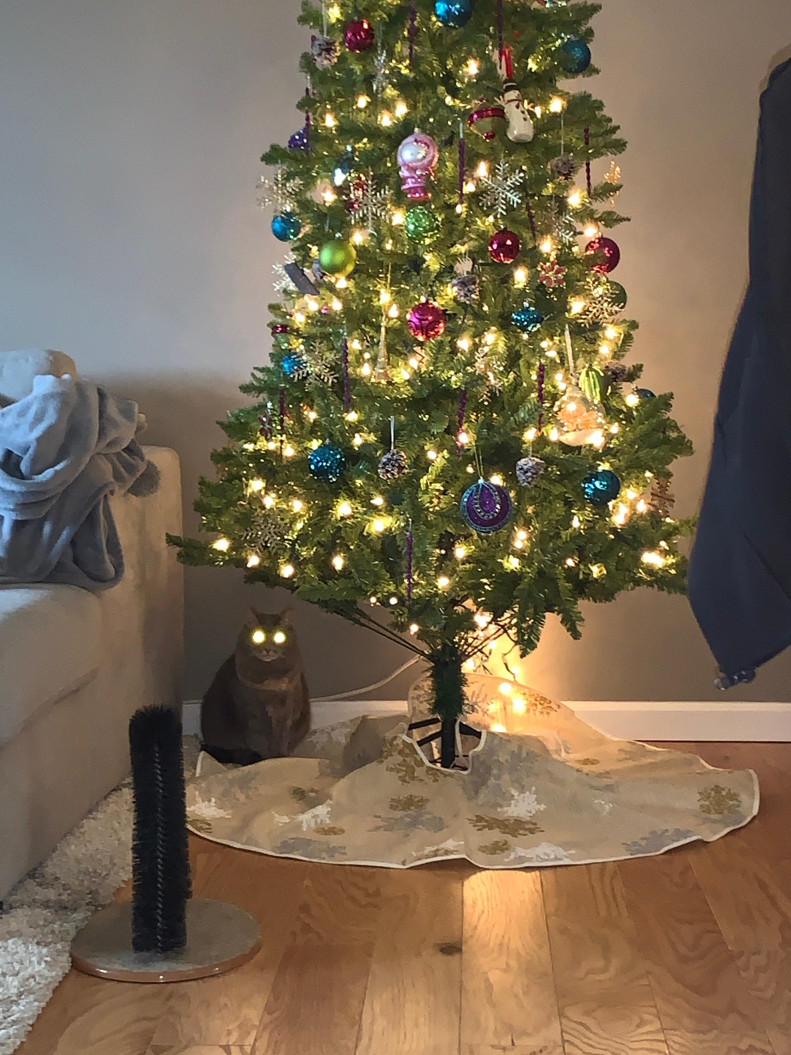 My cat and my tree are both plugged in and ready for Christmas.