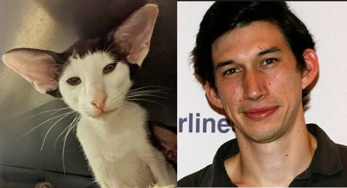 Found our cat's Doppelganger.