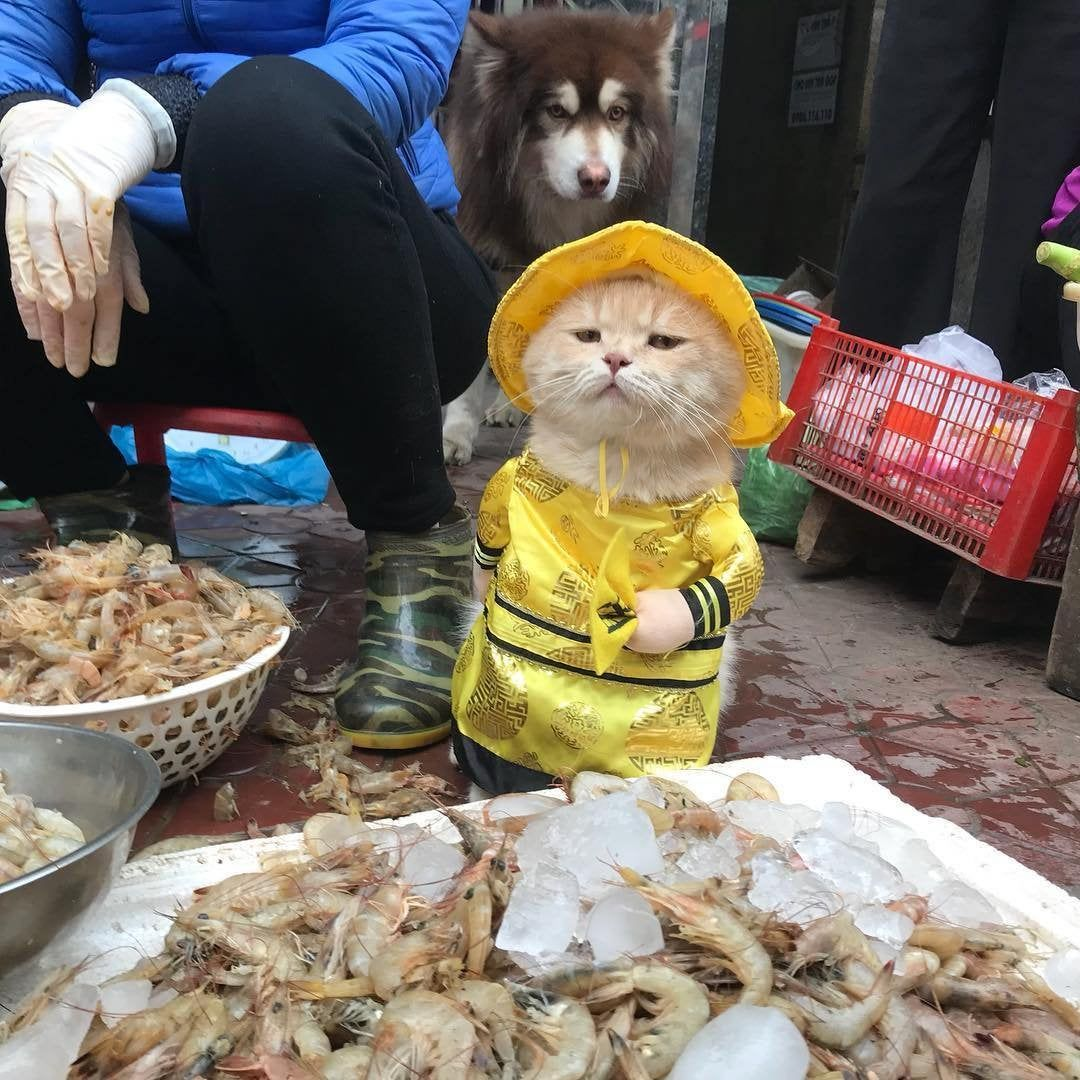 Fresh fish come and get it
