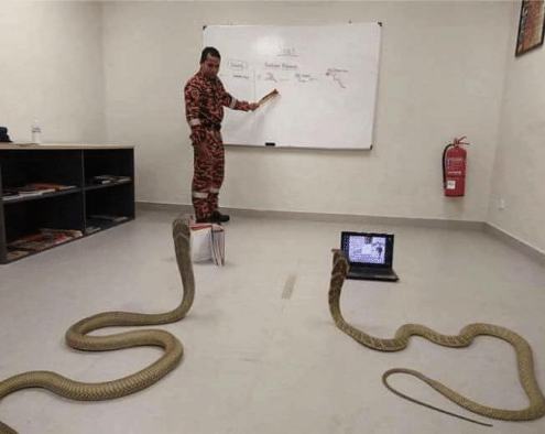 The students took up Python programming very quickly.