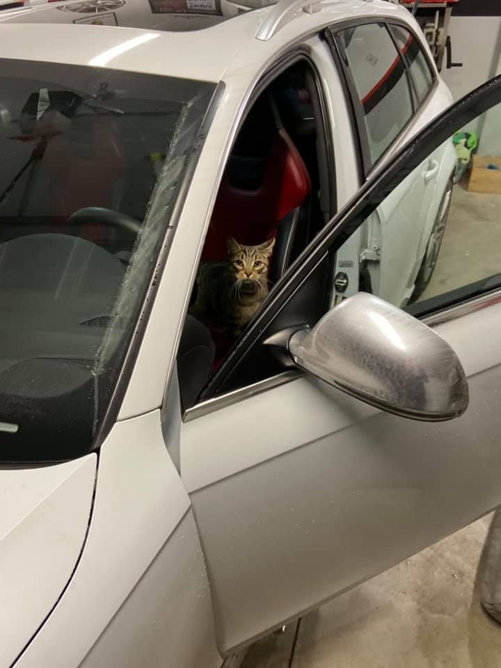 That's My Cat. That's Not My Car.